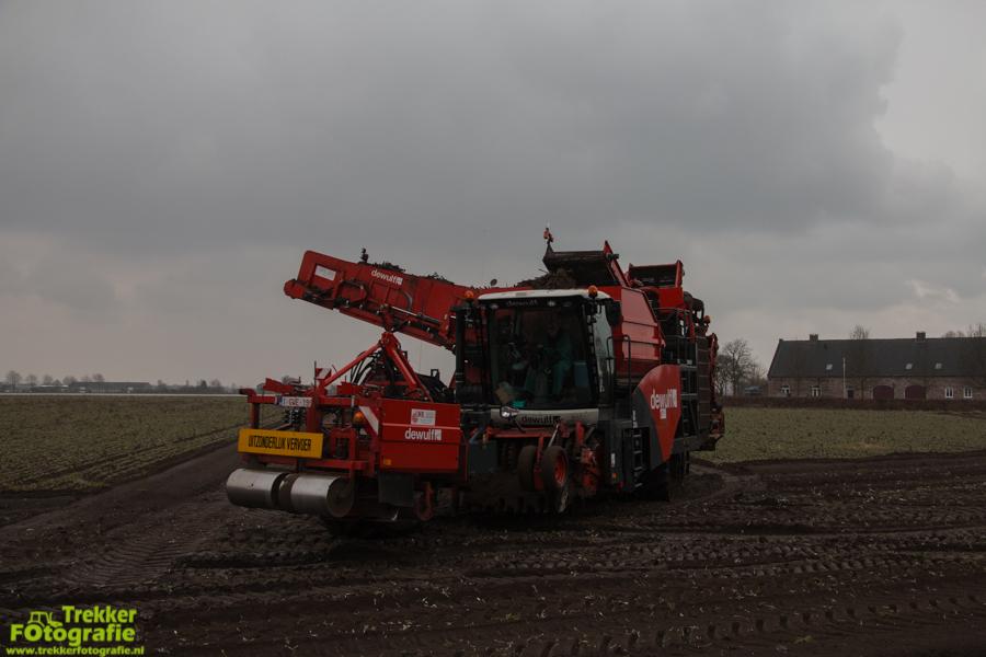 trekkerfotografie-schorseneren-rooien-weltjens-bocholt-IMG_6743