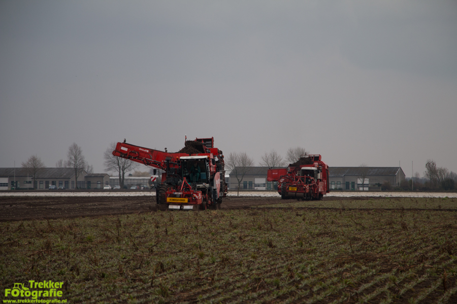 trekkerfotografie-schorseneren-rooien-weltjens-bocholt-IMG_6750