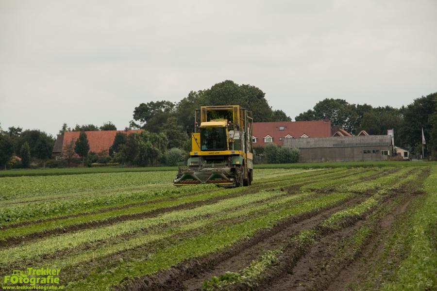 trekkerfotografie - spinazie - oogsten - breure - IMG_1488