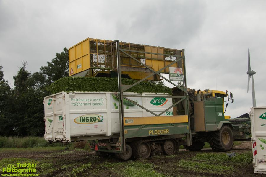 trekkerfotografie - spinazie - oogsten - breure - IMG_1494