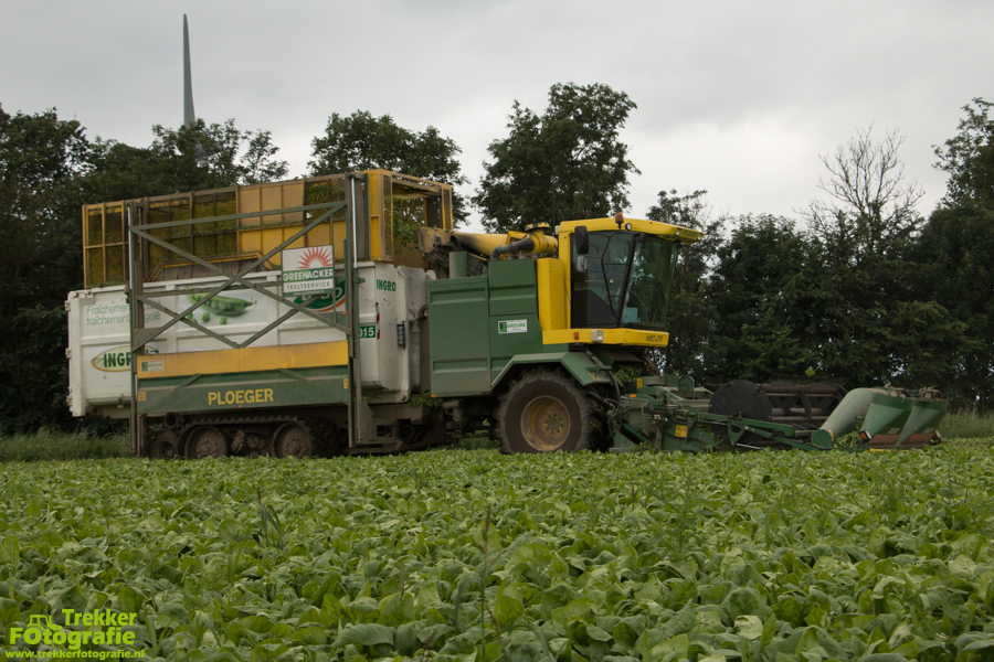 trekkerfotografie - spinazie - oogsten - breure - IMG_1501